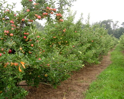 Narrow Lane Orchard | North Kingston, RI 02852
