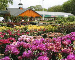 Scituate Nursery Farm and Greenhouse | North Scituate 02857